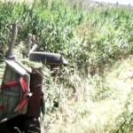Accident: Au ajuns cu căruța într-un canal de irigații și au fost îngropați în lucernă – VIDEO