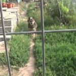 Radu Negru: Familia fostului senator Vasile Nedelcu s-a apucat de afaceri ilegale cu câini maidanezi / Video